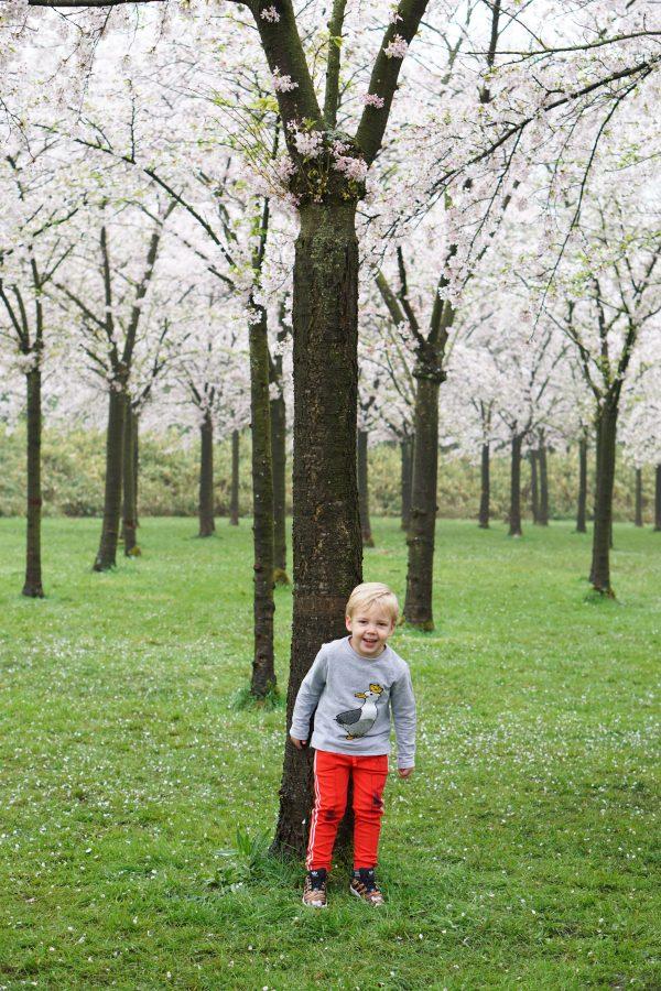 Kersenbloesempark kersenbloesemtuin Amsterdamse Bos