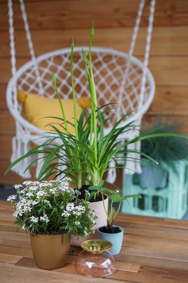 boho tuin hangstoel kleine elho plantenbakken