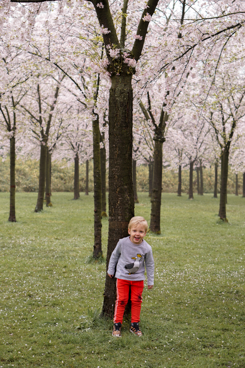 kersenbloesempark amsterdam met kinderen