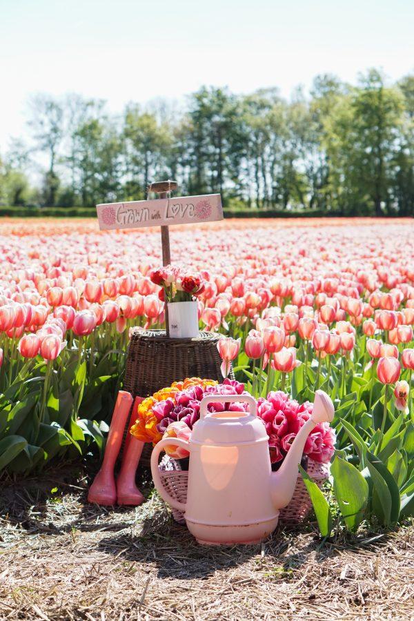 welkom fam flower farm lisse