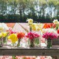 bloemenvaasjes tulpen