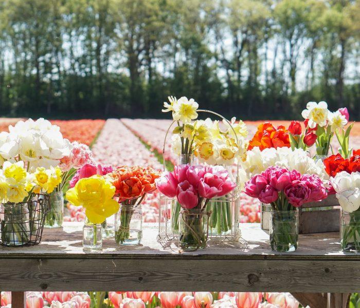 Op bezoek bij Fam Flower Farm