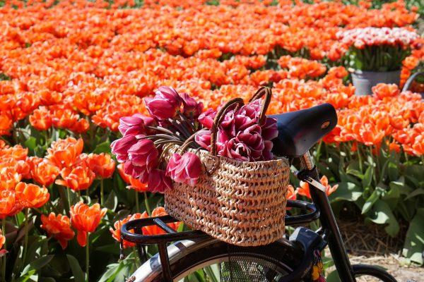 fietsmand bloemen tulpen lisse