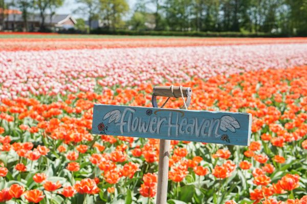 flower heaven fam flower farm