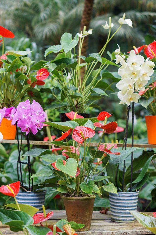 prachtige planten urbanjungle orchidee de orchideenhoeve