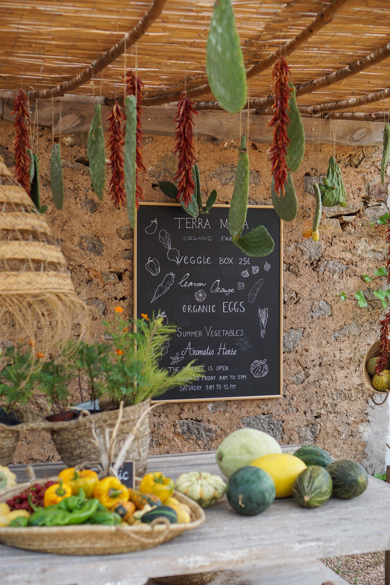 veggie groenten markt terra masia