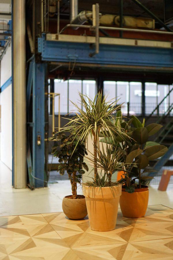sprklr duurzame planten