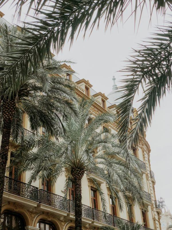 palmboom valencia