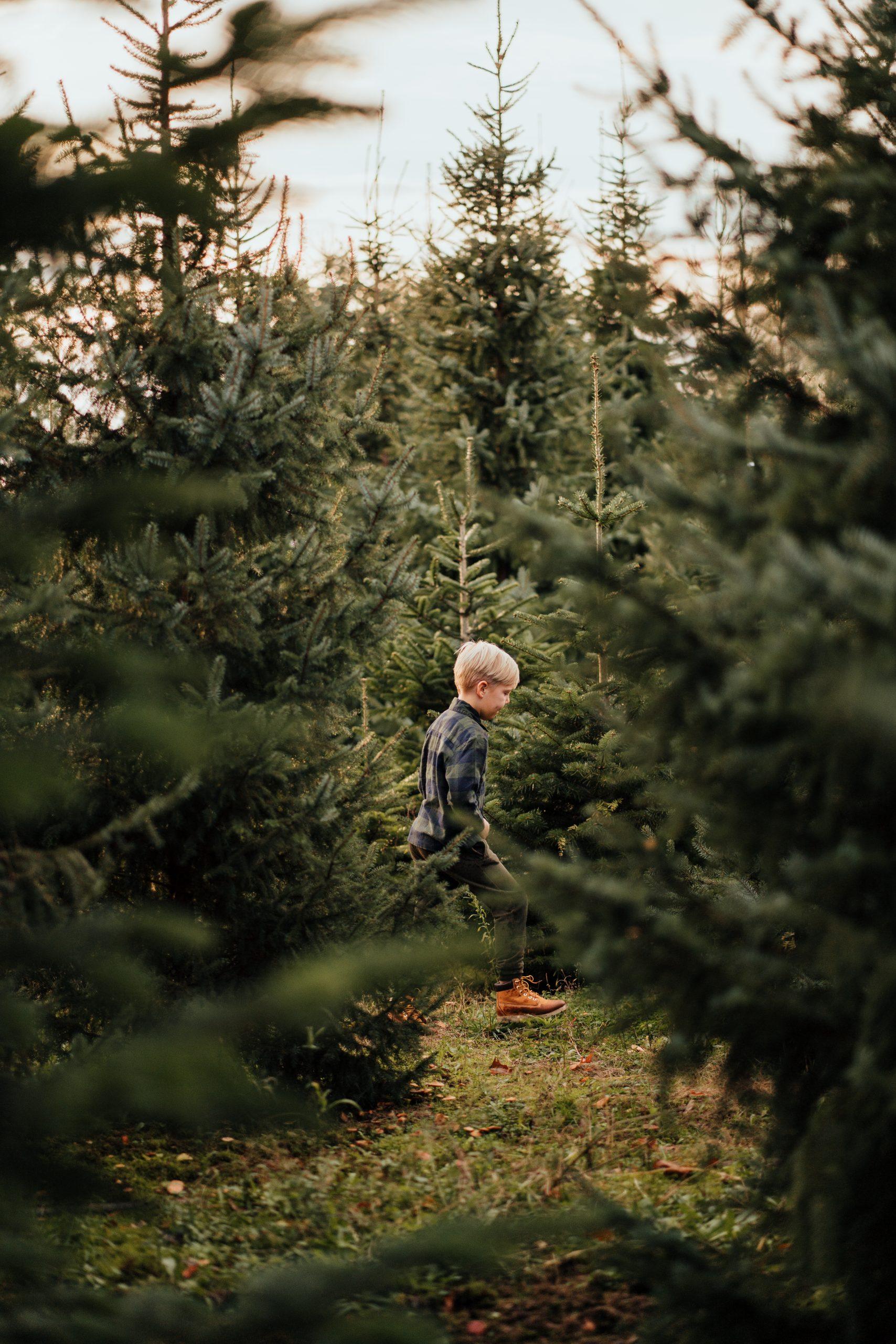 kerstbomen fotoshoot kerst groen