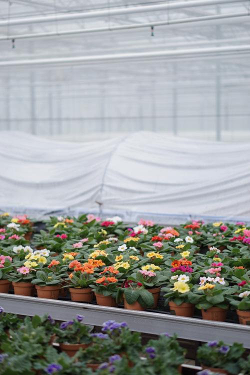 eetbare bloemen kwekerij