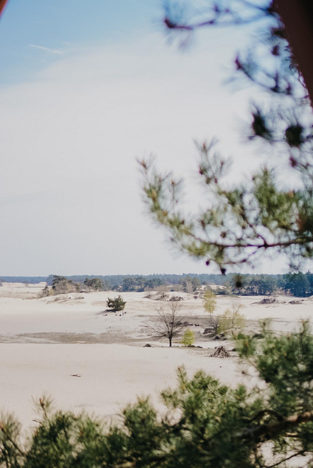 natuurgebied zandverstuiving vakantie in nederland