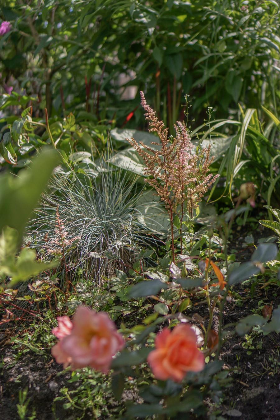 groene zomerse tuin planten