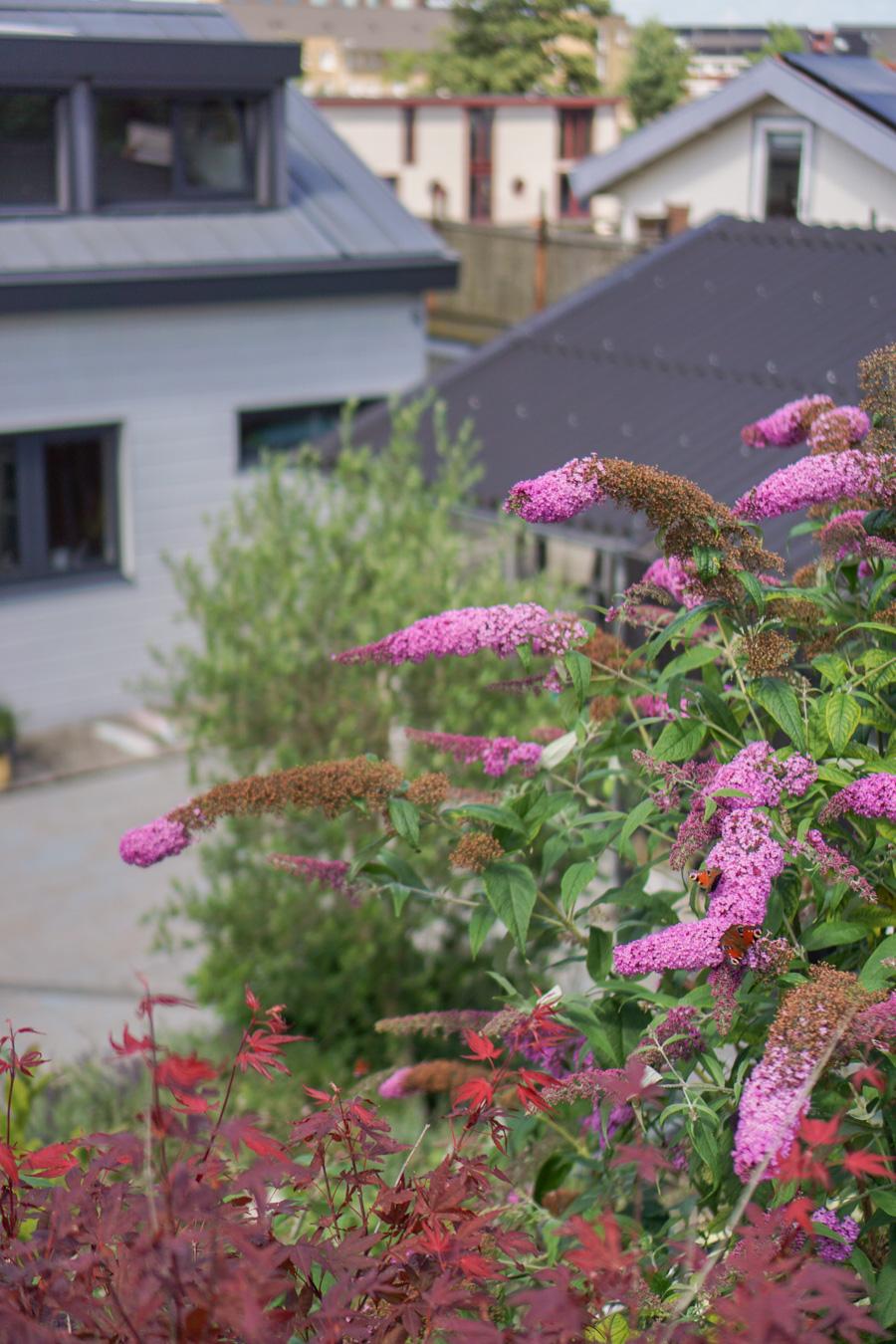 vlinderstruik duurzame ecologische tuin